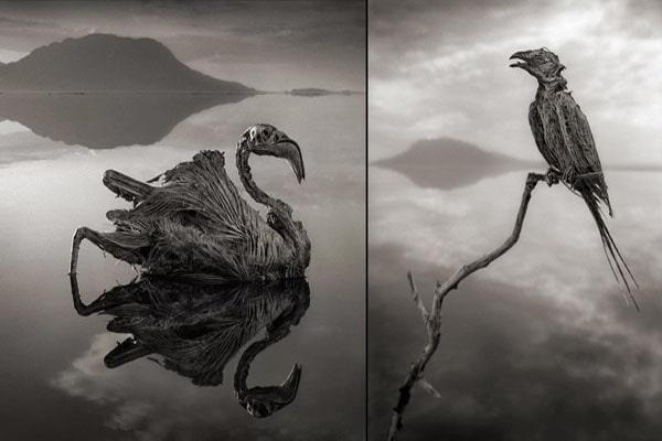 fenomena langkah danau mumi